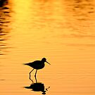 Sand Piper at Sunset by Flux Photography