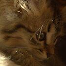 Fluffy kitten by AbsintheFairy