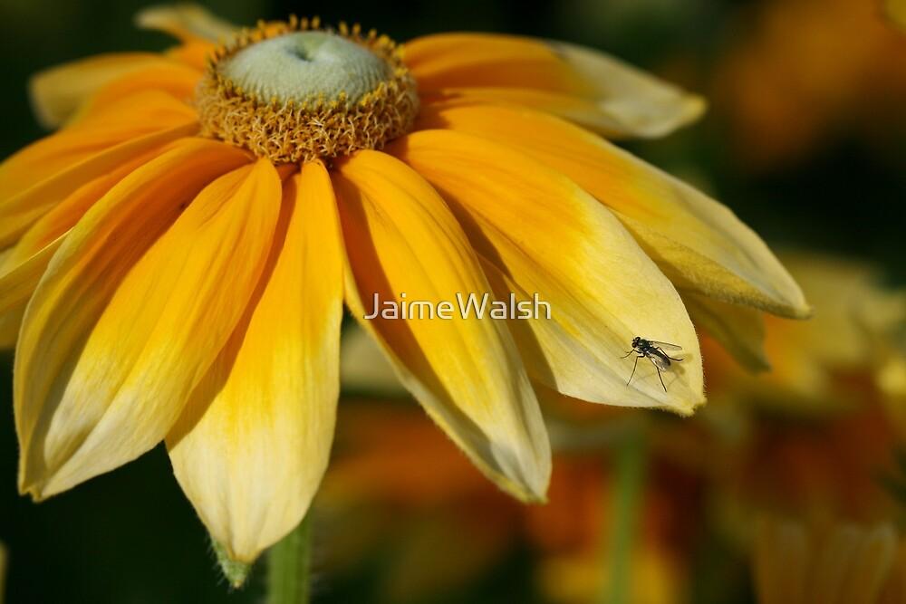 Yellow petals by JaimeWalsh
