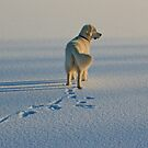 Walking on the frozen lake by Trine