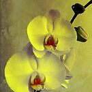 Yellow Orchid by Ineke-2010