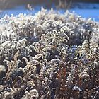 Puffy Reed in Sunny Winter Day by denis-romanov