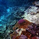 Corals - Ocean flowers by Alexey Dubrovin