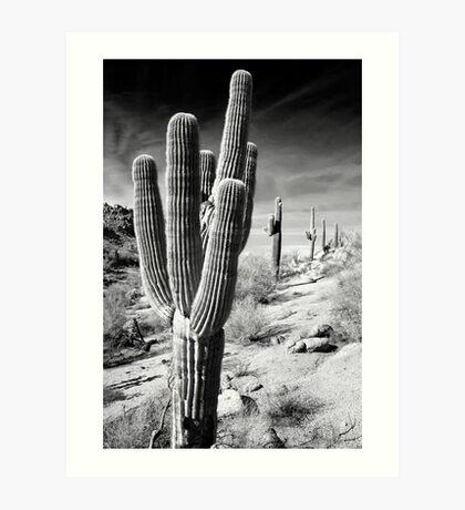 Saguaro Line Art Print
