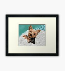 Chewie the Adorable Yorkie Framed Print
