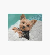 Chewie the Adorable Yorkie Art Board