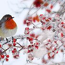 Robin Red Breast in Winter by Morag Bates