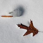 Traces and Tracks in the Snow by Otto Danby II