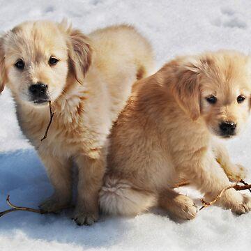 Golden Retriever Puppies First Winter #3 by LaurieMinor