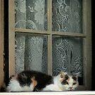 Calico Cat by Hope Ledebur