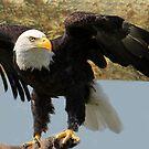 Eagle Eyes by vette