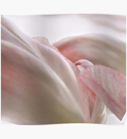 Tulip2 Poster