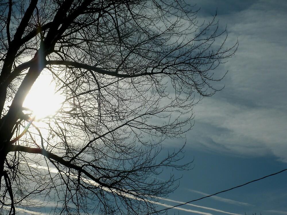 Sunshine through the tree by HardworkinJudy