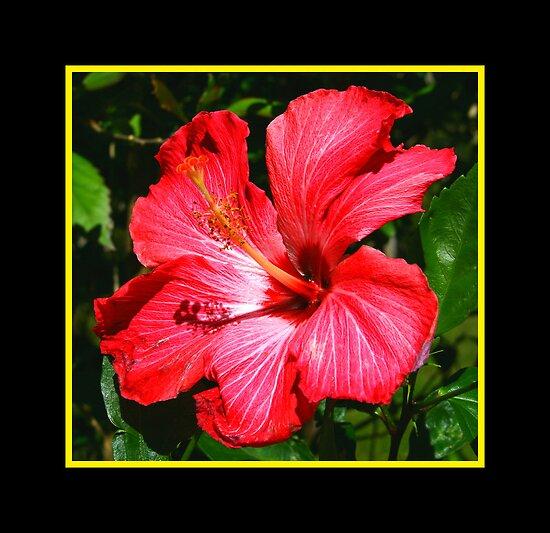 flor de maga posters by roberto perez redbubble