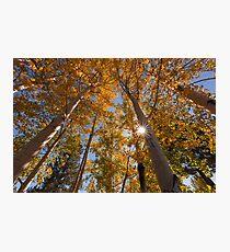 Sunburst and Aspens 3 Photographic Print