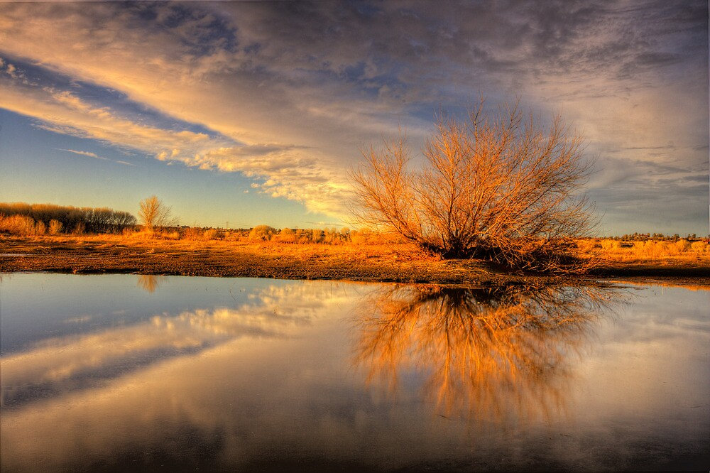 Tree Flares before Sunset by Bob Larson