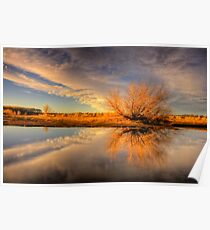 Tree Flares before Sunset Poster