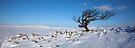 A Yorkshire Winter Wilderness by SteveMG