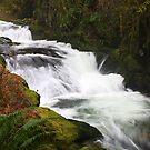 Sweet Creek Rapids #2 by Chappy