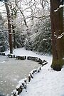 A Winter Walk in the Woodlands: Dulwich Woods, London, UK. by DonDavisUK