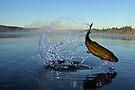 Leap For Joy by Brian Pelkey