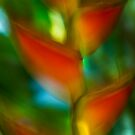 Heliconia #02 by LouD