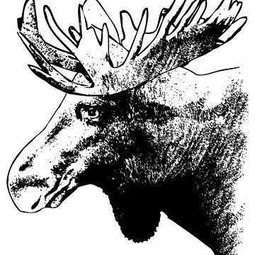 Moose - Elk by Port-Stevens