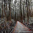 The Long Walk by infinitephotos