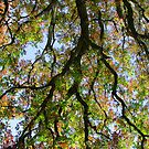 View through the Canopy by ECH52