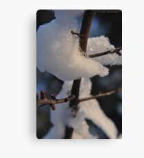 The Cold Thorn Canvas Print