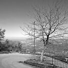 Laureana Cilento: landscape with road and tree by Giuseppe Cocco