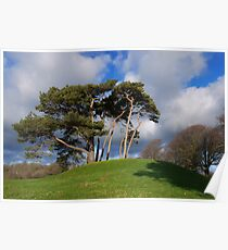 Winchelsea Trees Poster