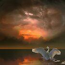 Swan by Igor Zenin