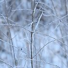 Winter Fragility by denis-romanov