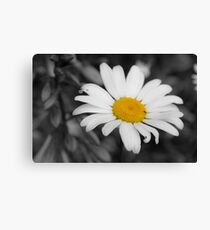Lonely Daisy  Canvas Print