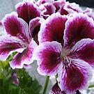 PURPLE flower by nneri12