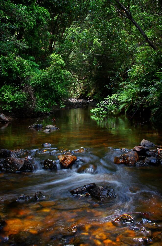 Little Creek, Phantom Valley by Rhana Griffin