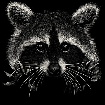 racoon by sibosssr