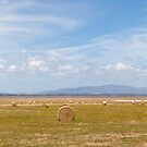 Hay Bales Panorama by Will Hore-Lacy