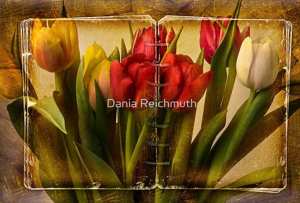 Tulipa by Dania Reichmuth
