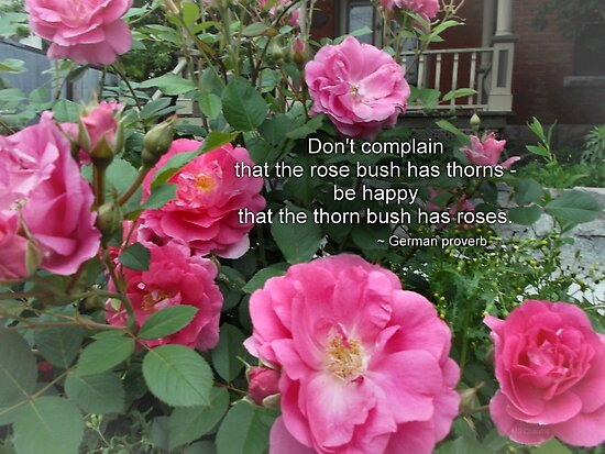 Rose bush happy pink roses german proverb posters by m sylvia rose bush happy pink roses german proverb by m sylvia chaume mightylinksfo