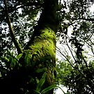 Forest, Yangmingshan by Digby