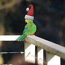 Weihnachtskönig Papagei von GriffMAD
