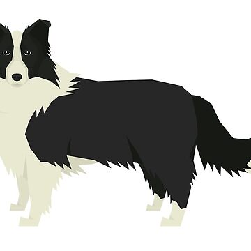 Border Collie by tcarey