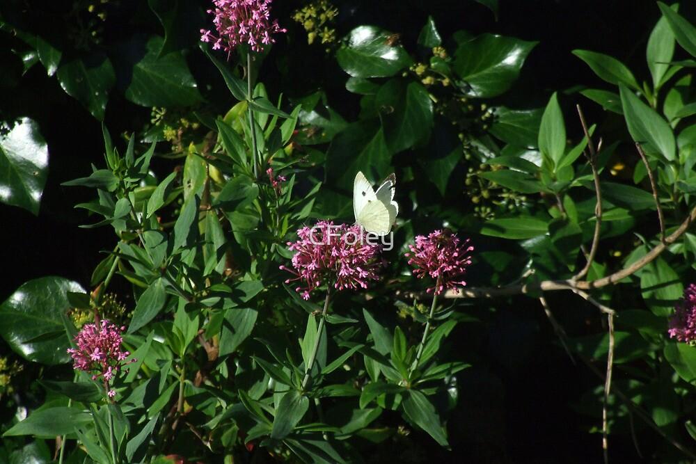 Butterfly Bush by CFoley