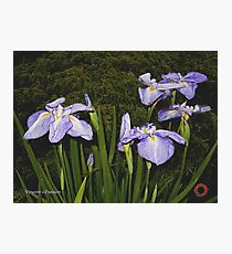 D1G1TAL-M00DZ ~ FLORAL ~ Vincent's Passion  by tasmanianartist 131218 Photographic Print