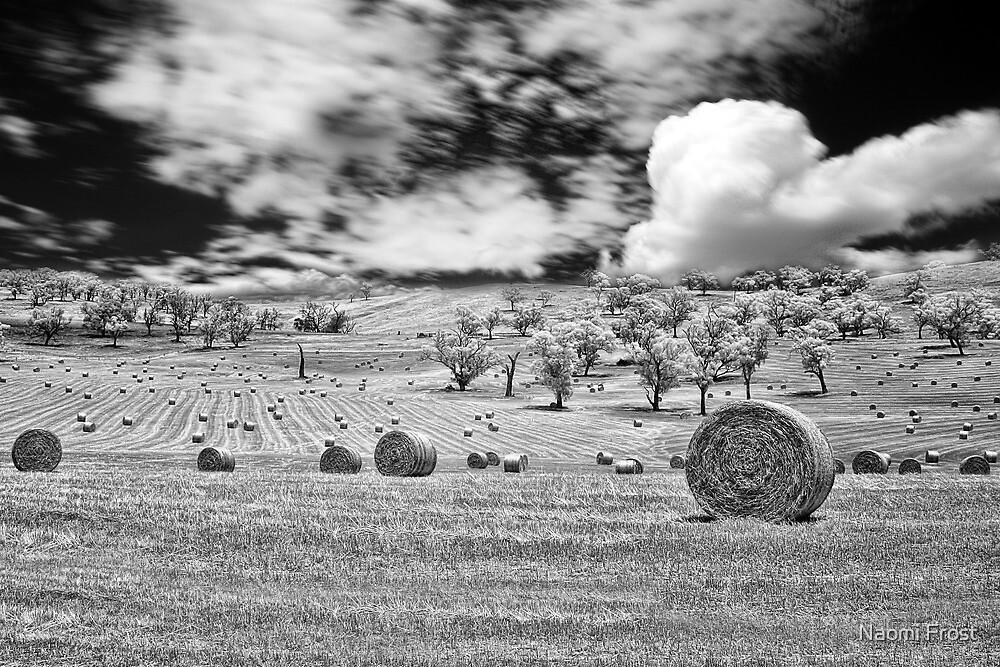 Harvest by Naomi Frost