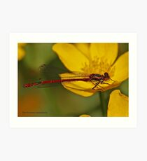 Large Red Damselfly Art Print