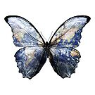 Morpho - Earth Butterfly by O O