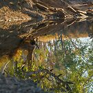 Outback Reflection by Toddy4x4